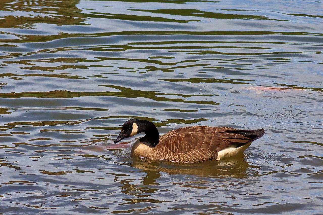 Meadowlark_-100515_19
