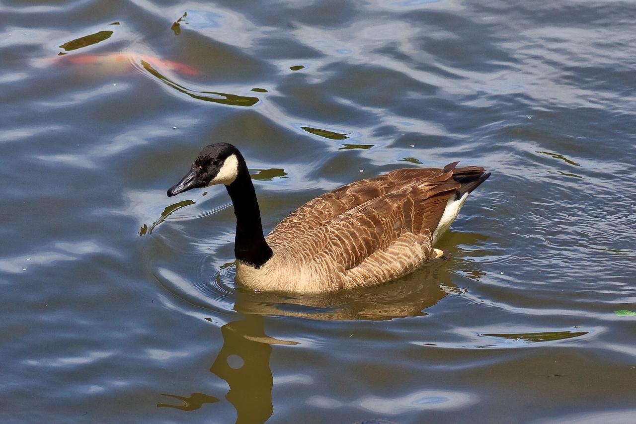 Meadowlark_-100515_21