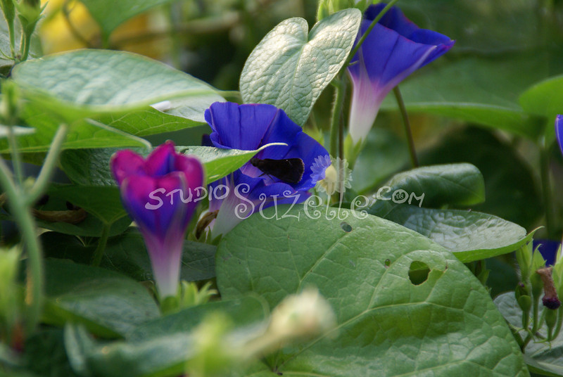 2007, 08-13 - Flowers (104)