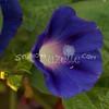 2007, 08-13 - Flowers (100)