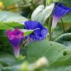 2007, 08-13 - Flowers (102)