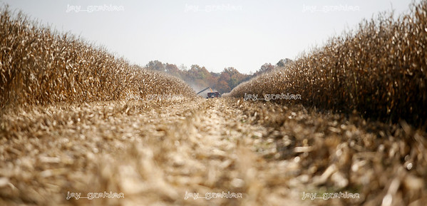 Nate and Arnie Ralston are seen in the distance 'dumping on the go' at some of the Ralston's farm land located on IL route 130 about ten miles south of Charleston, Illinois on Saturday, November 1, 2008. (Jay Grabiec/Staff Photographer)
