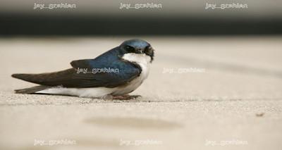 20080428_Bird2