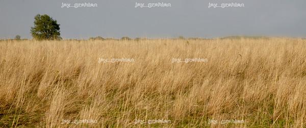20080505-Landscape