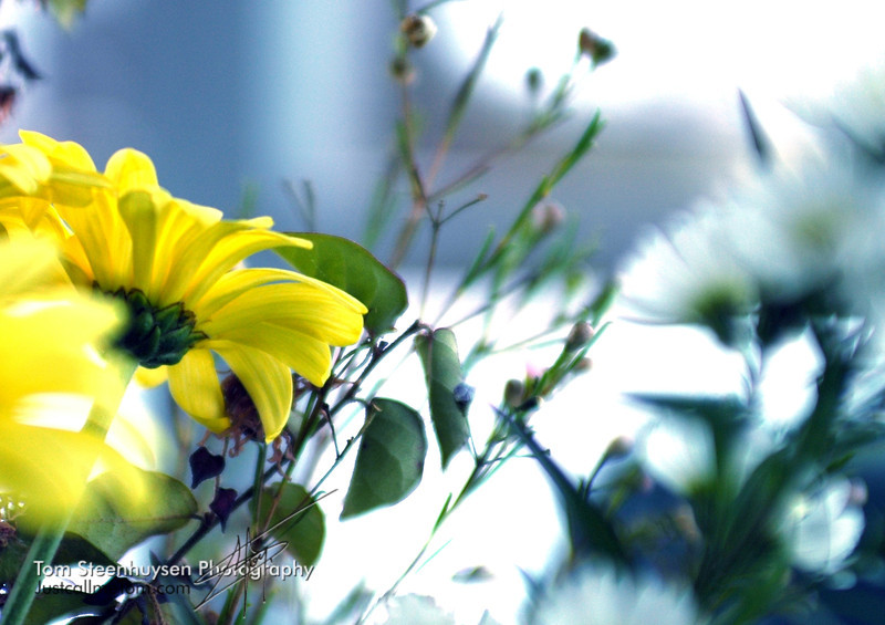 Nature's Beauties - dressed in yellow