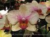 Orchids, Atlanta Botanical Gardens (15)