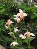 Orchids, Atlanta Botanical Gardens (11)