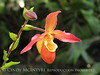 Orchids, Atlanta Botanical Gardens (21)