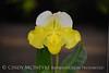 Orchids, Atlanta Botanical Gardens (2)