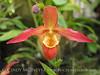 Orchids, Atlanta Botanical Gardens (19)