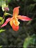 Orchids, Atlanta Botanical Gardens (20)