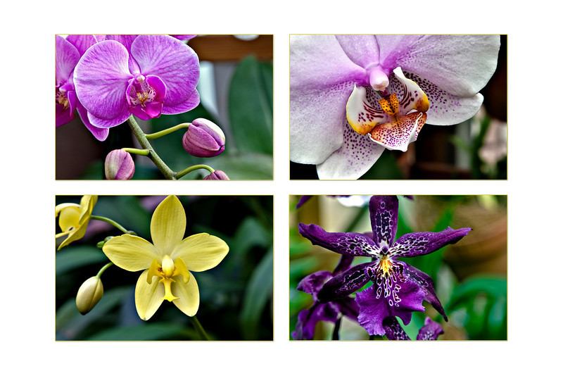 4-orchid poster 20 x 30