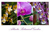 orchid vertical poster 20x30