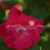 2014, 04-25 Flowers111