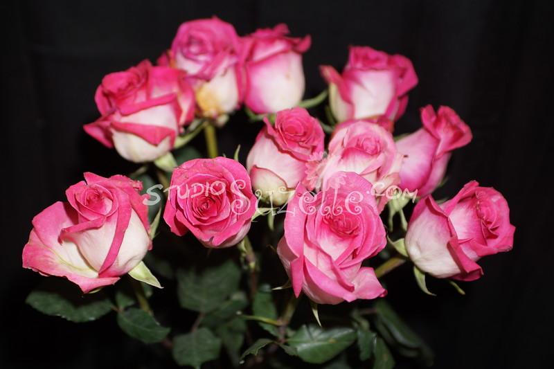 2014, 02-14 Valentines103