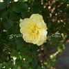2014, 04-25 Flowers118