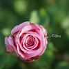 2014, 04-25 Flowers105