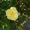 2014, 04-25 Flowers116