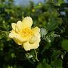 2014, 04-25 Flowers114