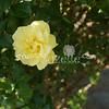 2014, 04-25 Flowers119