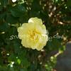 2014, 04-25 Flowers117