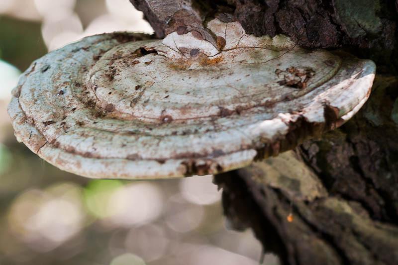 A Wild Mushroom