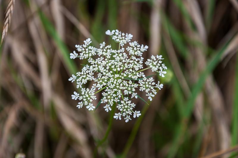 Flower near a pond