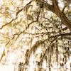 Preserve This Tree Too - Copyright 2015 Steve Leimberg - UnSeenImages Com _M1A9213