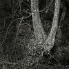 Double Tree at Golden Pond - Close Up B&W Copyright 2016 Steve Leimberg - UnSeenImages Com _Z2A0766