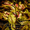 Leaves - PAINTING - Copyright 2016 Steve Leimberg - UnSeenImages Com _Z2A3946