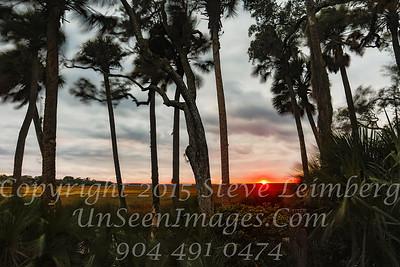 Sunset Through Trees II - Copyright 2017 Steve Leimberg - UnSeenImages Com _Z2A4747