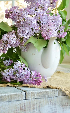 Lilacs in a teapot