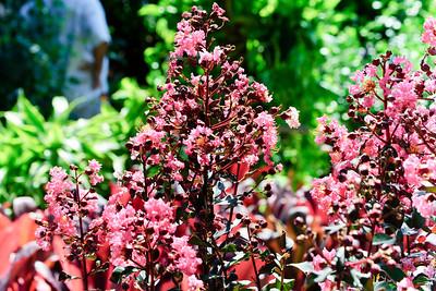 Flowers_DSC1369