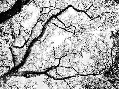 Trees - Copyright 2018 Steve Leimberg UnSeenImages
