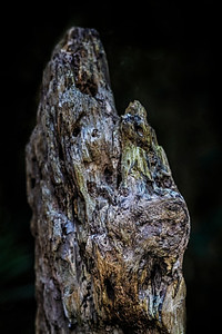 Remains of Old Tree II Copyright 2020 Steve Leimberg UnSeenImages Com L1000050
