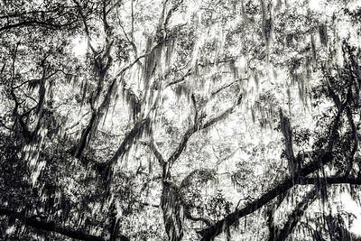 Trees Copyright 2021 Steve Leimberg UnSeenImages Com L1001114