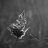 Flora Sunrise 07