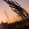 Flora Sunrise 08