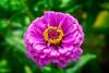 Donzell's Flower and Garden Center