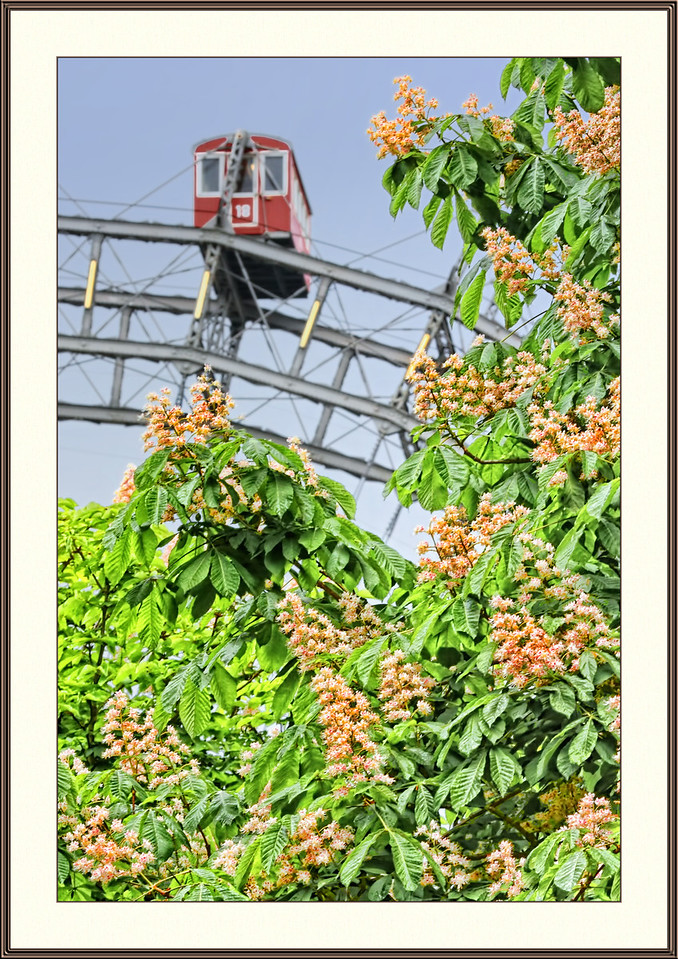 Chestnut trees blossoming in the Prater, Vienna