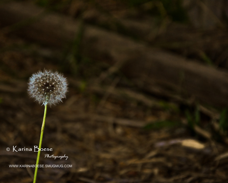 Little Perfect Round Weed