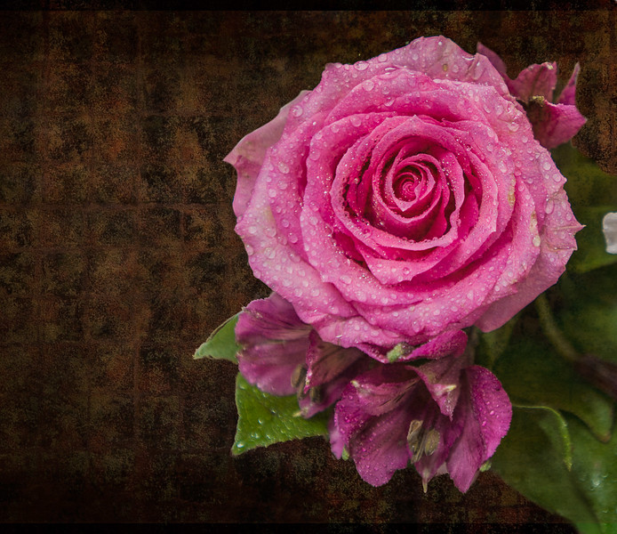 Rose 3-0206