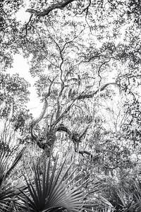 Trees Copyright 2021 Steve Leimberg UnSeenImages Com L1001143