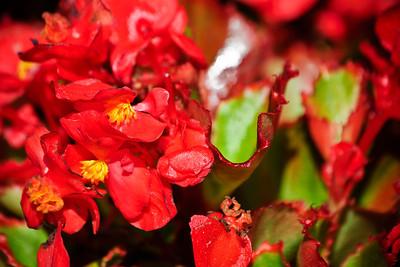 Flowers_DSC1379