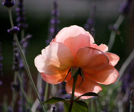 2011-11_flowers_2010-11-11_729_DJB_rights_reserved