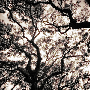 Tree 5 A - B&W Copyright 2018 Steve Leimberg UnSeenImages Com _DSF4128