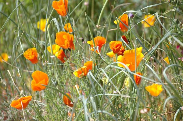 Flowers & Shrubs