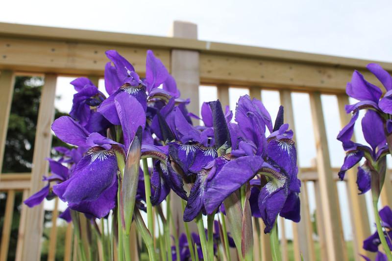 Purple bunch