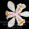 Super Flower - Copyright 2016 Steve Leimberg - UnSeenImages Com _Z2A5562