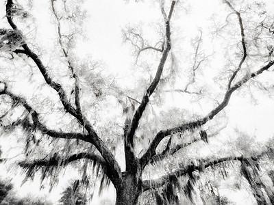Grand Oak Copyright 2018 Steve Leimberg UnSeenImages Com _DSF4429